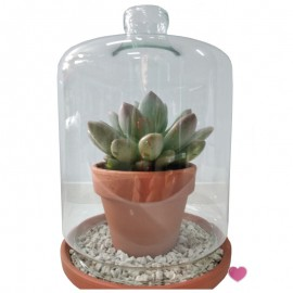 Succulent Miko cover glass