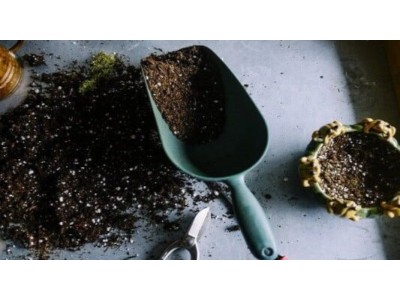 [How to plant a plant] Step by step guide to sowing your plants in the garden and in pots