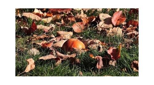 Autumn garden care: 6 tips to prepare your plants for winter